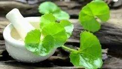 Centella Oil Centella Asiatica, Packaging Type: HDPE Drum