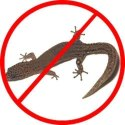 Lizard Pest Control Service