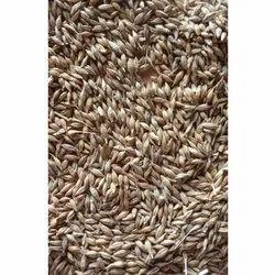 Dried Barley Grain, 12%, Packaging Size: 50 Kg