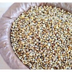 Brown Pearl Millet, High in Protein