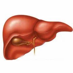 Hepatitis Virus Treatment  Service