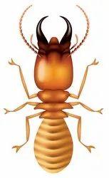 Commercial Pestico Termite Pest Control Services in Kolkata
