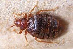 Home Pestico Bed Bug Treatment