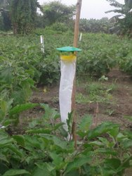 Leafminer Pheromone Trap