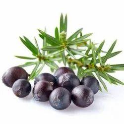 Juniper Berry Oils