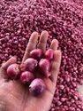 一级泰米尔纳德邦Sambar洋葱小洋葱青葱,包装尺寸:10千克,洋葱尺寸可用:中等