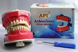 Pyrax API Dental Typodont Jaw Model, And Teeth B-561