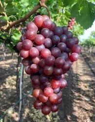 A Grade Flame Seedless Grapes, Packaging Type: Carton, Packaging Size: 4 Kg