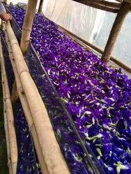 Blue Aparajita Flower