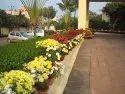 Garden Landscape Designing Service