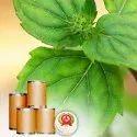 Menthol Flakes/ Powder Dry