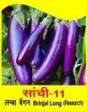 Natural Sanchi 11 Long Brinjal Seed, Packaging Size: 100 Gm