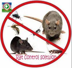 Rat Control Solution