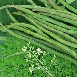 Tamil Nadu Green Drumstick Vegetable
