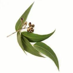 Eucalyptus Hydrosol Floral Water