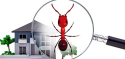 Commercial Ants Control Services in Ahmadabad, in AHMEDABAD