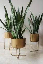 Truphe Plant Stand Indoor Plant Stand With Planter Pot Metal Floor Flower Stands- Golden (Set Of 3)