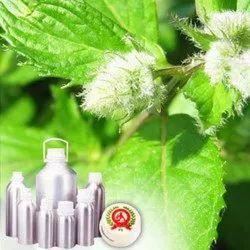 Leaf Acetate or CIIS III Hexanol Oil
