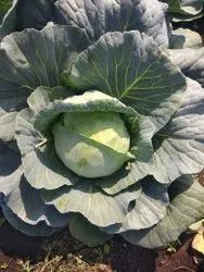 Green Vegetables A Grade Fresh Cabbage, Pesticide Free  (for Raw Products)