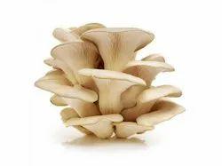 Fresh Oyster Mushroom, Packaging Type: Plastic Bag, Packaging Size: 1 Kg