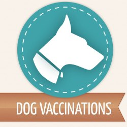Pet Vaccination Services