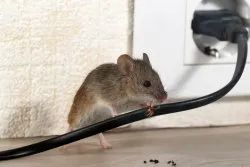 Industrial Rodent Control in Ahmedabad