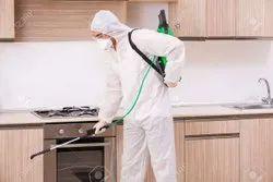 Kitchen Pest Control Service