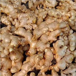A Grade Yellow Fresh Ginger, Packaging Type: Gunny Bag, Packaging Size: 50 Kg