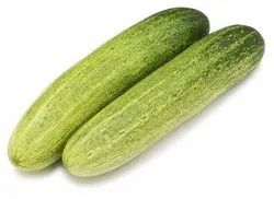 A Grade Uttar Pradesh Organic Cucumber, Net Bag, Packaging Size: 25 kg,50 kg