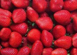 Fresh Strawberry Fruit, Packaging Type: Plastic Bag