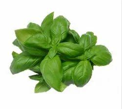 Indian Basil Seed