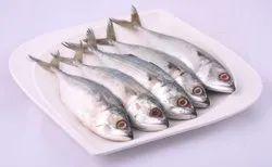 Fresh Bangda Fish