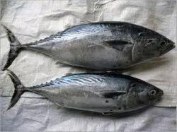 Fresh Tuna Fish, For Restaurant, 5 Kg