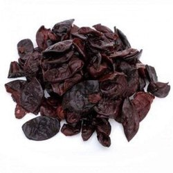 Kokum Seed