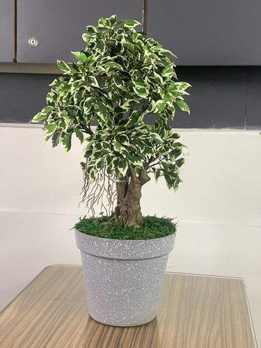 Artificial Potted Plants And Bonsai Artificial Ficus Bonsai Plant With Pot 65 Cm Wholesaler From Mumbai