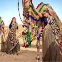 Chifn Braso Border Lace Saree