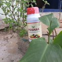 Organic Plant Nutrient