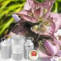 Clary Sage Floral Water