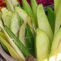 Kewra Kewda Keora Absolute Floral Water
