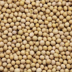 Soybean Seed, Packaging Type: Packet, Packaging Size: 25kg