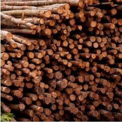 Brown Wooden Casuarina Wood Poles, For Party Supplies