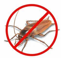Spray Cockroach Pest Control Service