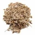 Dill Seed Oils