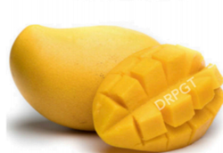 DRPGT Yellow Fresh Mango, Carton, Packaging Size: 1 Kg