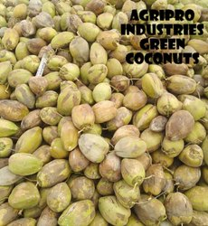 A Grade UDUMELPET Green Coconut, Packaging Size: loose load, Coconut Size: Medium
