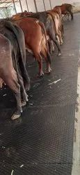 Cow Mat Stable Mat In Chennai 4 Ft X 7 Ft X 15 Mm