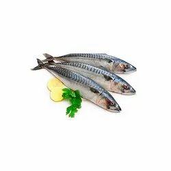 Sea Food Testing