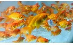 All Type Of Colour Full Fishes In Wholesale Price