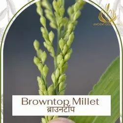 Organic Browntop Millet