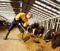 Animal Feed Testing